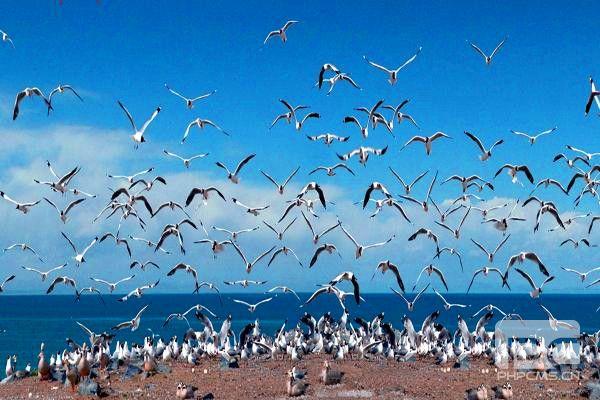 青海湖鸟岛青海湖鸟岛
