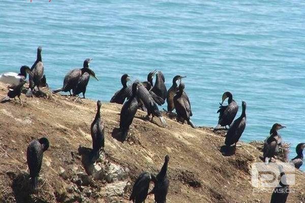 青海湖鸟岛鸬鹚岛