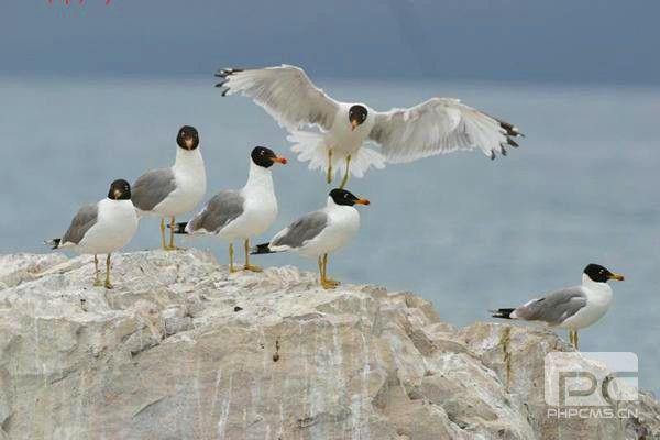 青海湖鸟岛生态观鸟通道